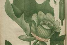 Botanical works / by San Sabba