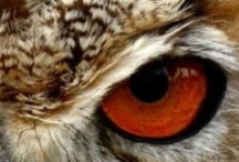the EYES have it ... / by Kay Parker