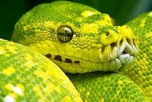 Amphibians and Reptiles / by Kay Parker