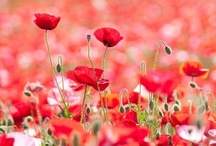 Flower&Garden / by Takeo Aoki