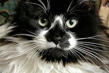 Whiskers / by Kay Parker