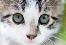 Cute Cats / Whether they're causing trouble, or purring innocently in our laps, cute cats have a way of warming our hearts. Check out some of these cute cats as well as some pet care tips to keep your own pets happy and healthy! / by Vetsupply Source