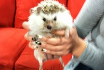 Topeka Zoo Animals / Watch 13 News at 4 on Friday's and 13 News Saturday Morning Edition to see different animals from the Topeka Zoo. / by WIBW