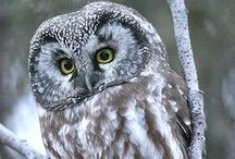 """The """"Owls"""" have it... / by Cindy Tanner"""