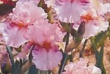 My New Iris Garden / by Elizabeth Warnek