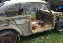 Chicken coop inspiration / by Snozcumber S