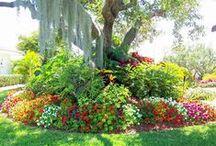Beautiful flowers & plants / by Katherine Blair