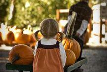 Pumpkin Patch ~ / No pin limits. Pin all you want.  / by Carolina ~ Lori