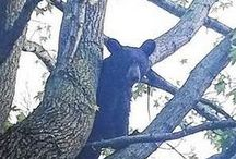 Bear Sightings / The many faces of Shawnee State University. / by Shawnee State University Alumni Association