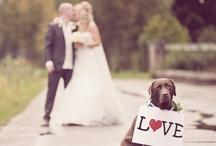 Wedding Ideas / by Claudia Wamack