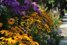 Garden Ideas / by Kathy Stephens