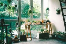 plants / by ♡ J A C K I E ♡