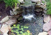 my backyard / by Lindsey Bell