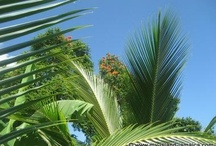 Jamaican Beauty / by My-Island-Jamaica.com