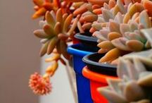Succulent Planting / Garden / by Marisete Fachini Girardello