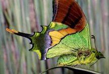 Butterflies... / Farfalle... Borboletas... Papillons... / by Marisete Fachini Girardello