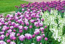 Longwood Gardens / by Debbie Scott