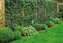 Garden / flowers, trees, veggies, tips, tools, etc for gardens / by Lex Hohan