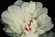 Fleurs / by Christopher Burns
