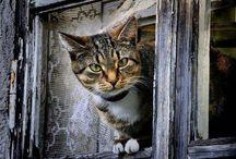 Cats & Windows  / by Joke