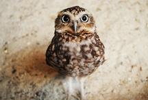 <Owls> / by Eva Caro