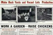 Urban Homesteading With THE Green Chick / What Will You Do When The Lights Go Out? Learning To Live A Sustainable Life.  / by Maria McCulloch ***The Green Chick