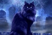 Halloween Cats / Let's Pin Halloween Cats. Please, feel free to invite your friends. / by Cat n Day