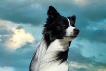 Dogs are forever #1 / Mio Grande Amore / by Silvia Della Libera
