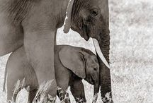 Animales asombrosos / by Carmen Banck