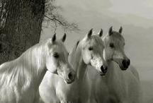 Horses / by Linda H.