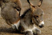 Donkey / public / by Pim Jansen