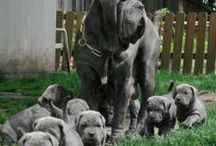 Dog Training / A dog's mother begins puppy training from birth. She training puppies to wait for food; she controls when they play and how far they travel, Create the best possible relationship with your dog! / by Johnny Lyman