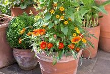 Pots for every month / Seasonal colour and plant combinations for any small space or garden. / by BBC Gardeners' World Magazine