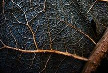 Texture & Detail / by Kara