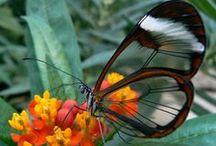 insectos en su belleza / by Kalu Valmez