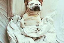 too cute. / by Alex Lackard