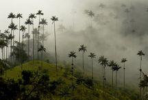 South America / by Nikki Leigh