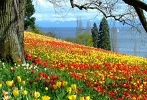Spring has sprung / by Lisa C