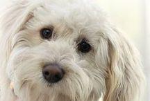 Favorite dogs / by Debra Galarneau