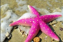 Sea Creatures / by Linda Broadhurst