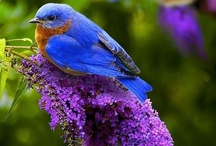 Birds / by Linda Broadhurst