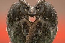 Owl Love / Owls, Owls and More Owls!   / by Nikey Mattson