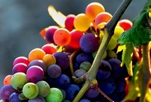 Vineyards, Gardens, Wine  / I enjoy setting out in a gardens with a few friend over a glass a wine.   / by Joseph Rico