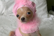 Well Fashioned Doggie! / I love dogs! I could look at them for hours! Even better in hats, wigs, costumes and outfits!! It just never gets old! Always good for some smiles! / by Chrisie Pugliese