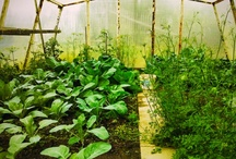 Greenhouses / by Pick-A-Pepper Fresh Local Food For All
