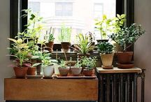 garden | indoor / indoor houseplants | container gardens | ideas & inspiration / by Melissa Galvin