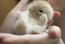 Bunnies!  =:-) / by Jennifer Kleitsch