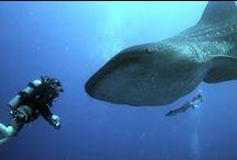 Aquatic Conservation Leader / by Georgia Aquarium