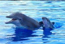 Marineland Dolphin Adventure / by Georgia Aquarium