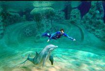 News & Features / Georgia Aquarium in the media: news, blogs, articles, & more! / by Georgia Aquarium